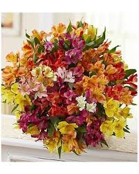 peruvian lilies new shopping special peruvian lilies 100 blooms bouquet only by 1