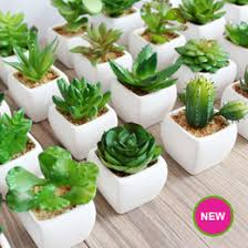 Plants For Office Succulent Office Plants Online Succulent Office Plants For Sale
