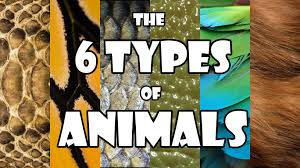 smarter in seconds the 6 types of animals youtube