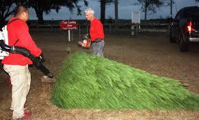 alabama christmas tree farms stay evergreen despite drought