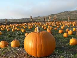 Where To Seeking Desperately Seeking Pumpkin Where To Get Your Gourd On Sfoodie