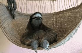 Angry Sloth Meme - an excess of sloth gifs for all of your sloth gif needs album on imgur