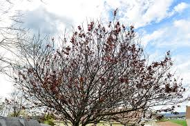 dying tree ask an expert