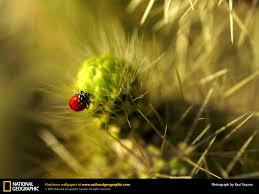 ladybug picture ladybug desktop wallpaper free wallpapers