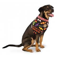 halloween pet background grr antula dog halloween costume with same day shipping baxterboo