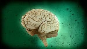 si e des motions dans le cerveau n ajustez pas votre cerveau ici explora