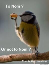 Nom Nom Nom Meme - to nom or not to nom weknowmemes