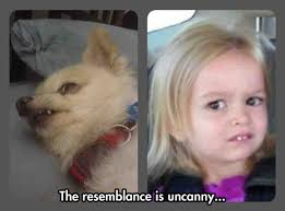 Dog Teeth Meme - extraordinary resemblance the meta picture