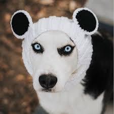 panda bear zoo snood petagadget