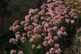 imagenes para enamorar con flores hierba gallega de enamorar cosas de meiga
