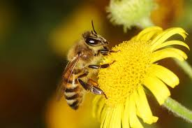Seeking Honey Honey Bees In Winter How Do They Survive Terminix