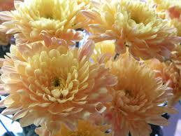 Frugal Flowers - flowers townie blog