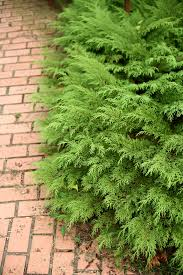 evergreens flowers and shrubs perfect for planting on hillsides