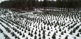 hansen tree farm