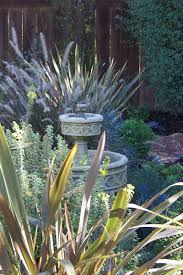 backyard landscape design san diego 02 letz design
