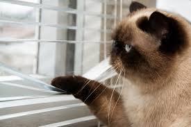 cat kotyara mustache feet tail watches street window blinds short