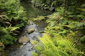 native rainforest plants auckland day tours blog