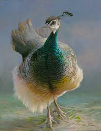 95 best peacock power images on pinterest blue colors and