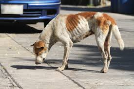 loss of dog 6 causes of sudden weight loss in dogs