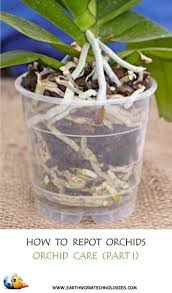 orchids care repotting orchids orchid care part i earthworm technologies