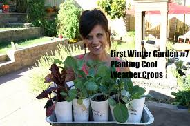 first winter garden series 7 how to plant cool weather crops in