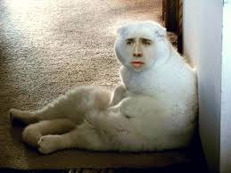 Nicolas Cage Meme - nicolas cage cat google search our lord and savior pinterest