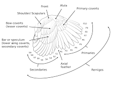 Male Spider Anatomy How To Id A Feather The Infinite Spider