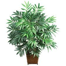 air purifying indoor plants pr energy