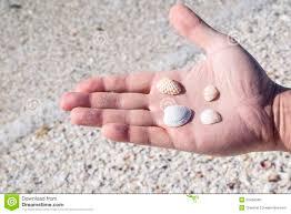 Assorted Seashells Handing Holding Assorted Seashells Stock Photo Image 52480048
