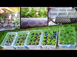 starting vegetable seeds tomato how to plant from seed grow square