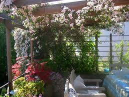 sch co balkone clematis balkon beautiful home design ideen johnnygphotography co