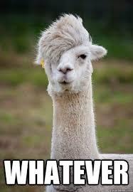 Whatever Memes - whatever hipster llama quickmeme