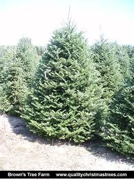 christmas tree fundraiser xmas trees