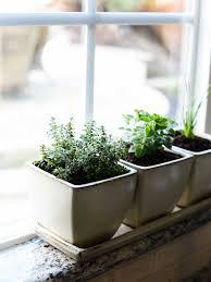 indoors garden organic gardening indoor vegetable garden ideas indoor herbal