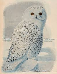 printable owl art free clip art snowy owl the graphics fairy