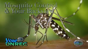 mosquito control u0026 your backyard youtube