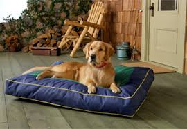 Cats In Dog Beds Non Toxic Organic Pet Beds For Dogs And Cats
