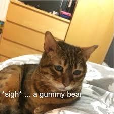 Depressed Cat Meme - depressed cat meme imgur image memes at relatably com
