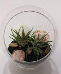 air plant glass pedestal terrarium diy complete kit with two air