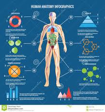 Google Human Anatomy Human Body Plants Infographics Pesquisa Do Google Infografics