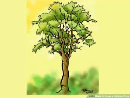 how to draw a detailed tree 7 steps with pictures wikihow