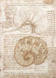 Leonardo Da Vinci Drapery Drawing Of The Uterus Of A Pregnant Cow 1508 Leonardo Da Vinci