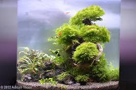 Aquascape Tree 2012 Aga Aquascaping Contest 343
