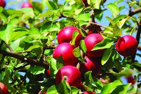 chambre agriculture 52 developpement des fruits des aides de la région pour les producteurs