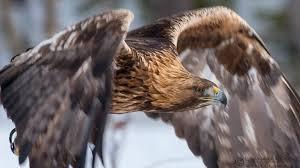 top 25 wild bird photographs of the week 55