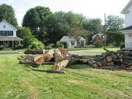 tree removal services in manchester ct