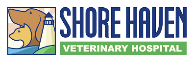 shore haven veterinary hospital veterinarian in east haven ct