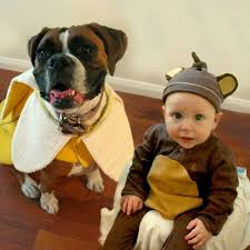 Boxer Puppy Halloween Costumes 20 Dog Halloween Costumes Ideas Pet