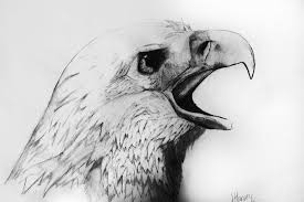 gallery pencil sketch images of animals drawing art gallery