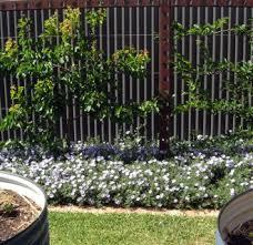 Trellis Garden Ideas Garden Trellis Ideas Pictures 20 Interesting Garden Trellis Ideas